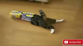 Funny crazy cats and animals
