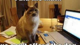 FUNNY CAT PICS EPISODE 3!!!!!!!!