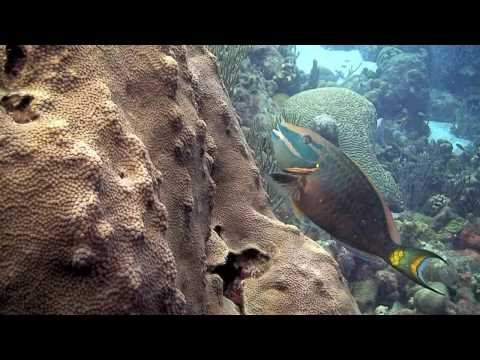 Let's Dive Bonaire Highlights