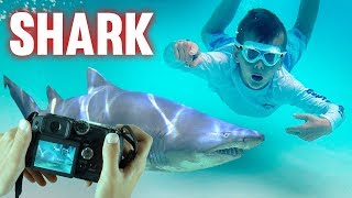 Wild Sharks CAUGHT ON CAMERA in Florida Keys!!  || Mommy Monday