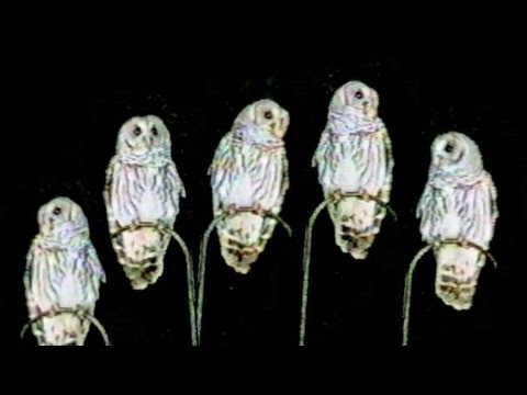 Owls Dancing