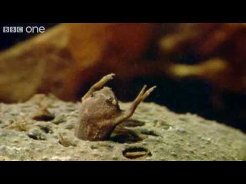 Frog Conductor - Walk On The Wild Side Highlight - BBC One