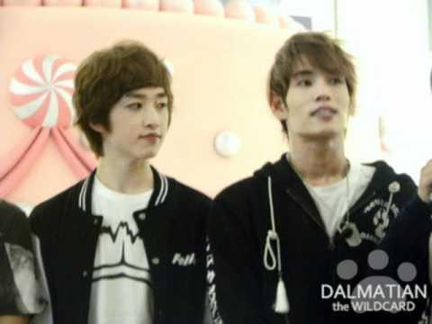 dalmatian pictures !