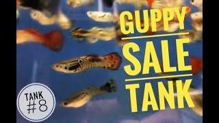 Fish Room Tour (43 Tanks): Tank #8