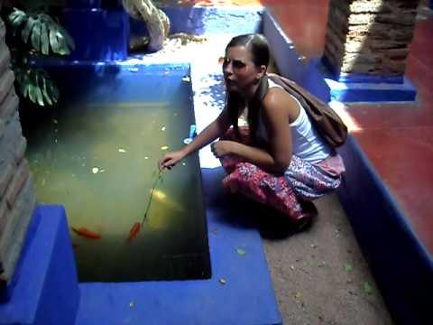Mónica loqueando con los pecesitos de la Majorelle