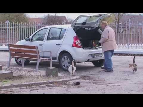 FELIN POUR L'AUTRE - prendre soin des chats errants