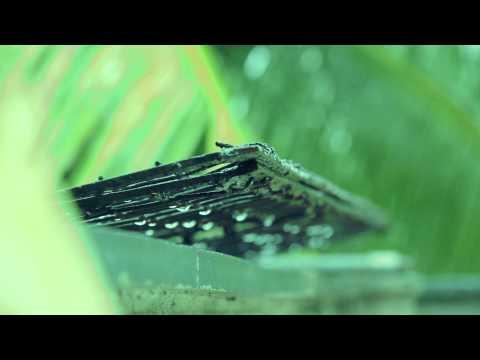 Garva (Poem - Punha Dhag datun yetat) - Milind Ingle