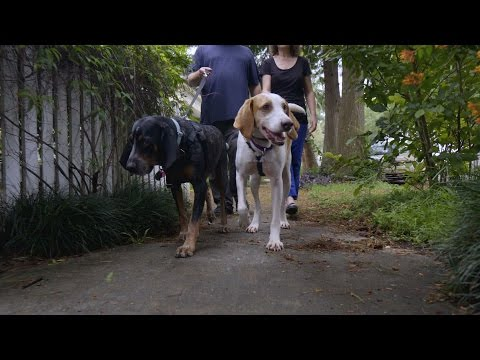 Two Country Hounds Find a Home Together in the Big Easy