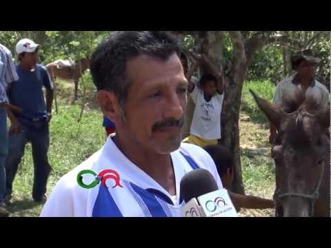LA MULA QUE PARIÓ EN EL CARMEN - MANABÍ - ECUADOR / ALTA CALIDAD