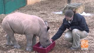 Meet our Baby Rhino!