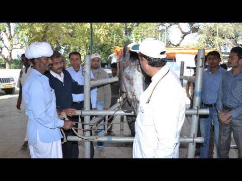 free treatment and vaccination camp for animals in village Goeli
