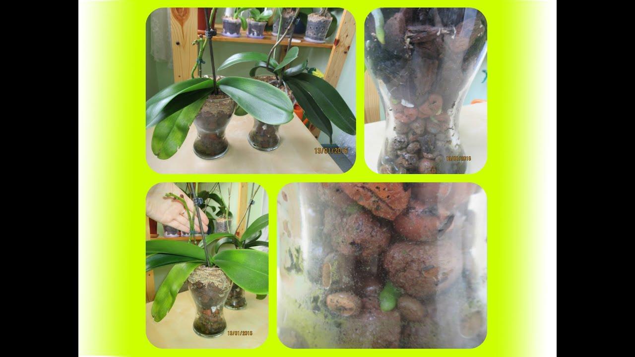 Выращивание орхидей в теплице или как создать экзотику у