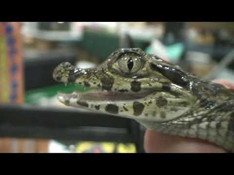 South Carolina Reptile Expo