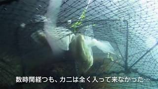 カニカゴ漁