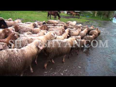 Տաշիրում չդադարող անձրևը գյուղացիներին անհանգստացնում է. նրանց հույսը «Նոյի տապանն է»