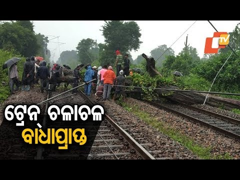 Train services disrupted as trees fall on rail tracks due to strong winds & heavy rains