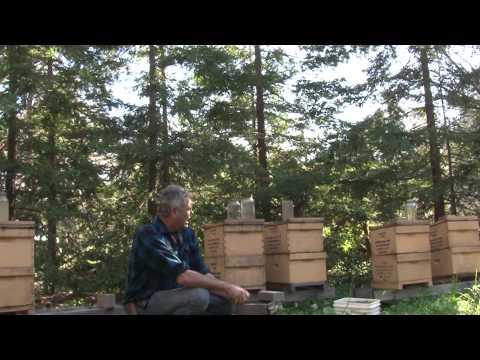 Bee Population Decline!