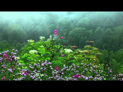 Rain Sounds with Tibetan Singing Bowls and Birds chirping [ Sleep Music ]