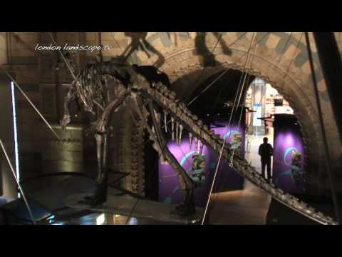 Dinosaurs! A visit to the London Natural History Museum (HD)