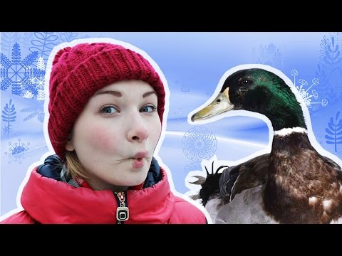 НА СЕРЕДИНЕ ПРУДА или ПРОГУЛКА С ЛИЛИМОНОМ в Царицыно! WINTER VLOG!!!