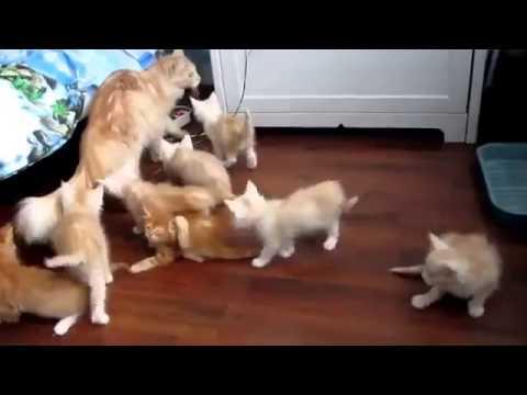 Anne Kedinin Yavrularını Korkutması