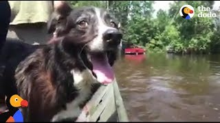 Dog Abandoned In Hurricane Harvey is Finally Rescued   The Dodo