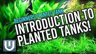 Planted Tanks - A Beginner's Guide | Part 1