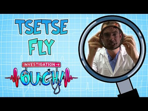 Download  Science for kids - Tsetse Fly | Body Parts | Experiments for kids | Operation Ouch Gratis, download lagu terbaru