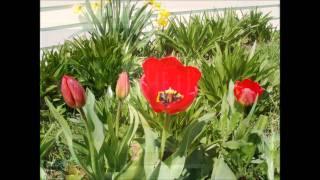 Watch Too Much Joy Susquehanna Hat Company video
