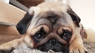 Dog 2019 - Funny And Cute Dogs 2019 Videos Compilation [2]