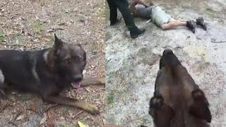 K-9 Praised for Catching Suspect After Separating From Deputy