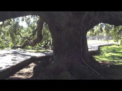DUPONT PARK AND TREATY OAK  ON THE RIVERBANK DOWNTOWN JACKSONVILLE FLORIDA