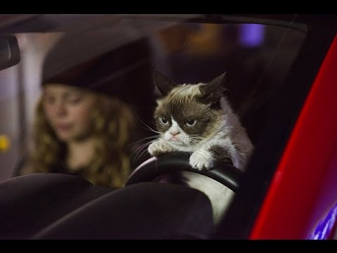Grumpy Cat's Worst Christmas Ever (Starring Aubrey Plaza) Movie Review