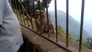 Incredible India / Kodaikanal / Horse  riding point  /Suicide point