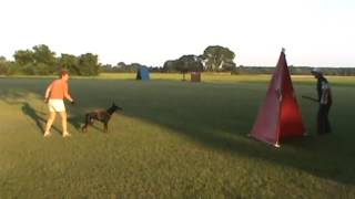 Indy's 1st Hold & Bark with Ken White