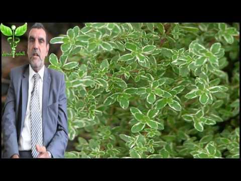فوائد الزعتر للشعر و للحامل  Dr mohamed al fayed محمد الفايد fayed thumbnail