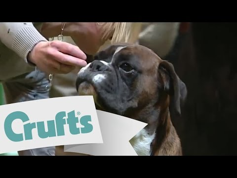 dfs Crufts 2011 Best In Group Working