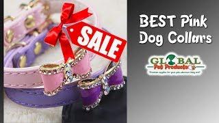 cute dog accessories in here cute dog accessories