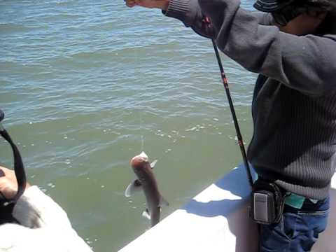 Mancing Ikan Besar Mancing Ikan Hiu