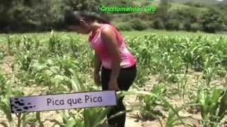 Organizacion Luz Azul - Videos Mix - 2015