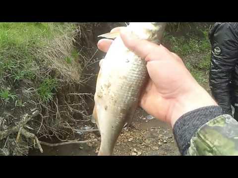 ловля сома на канале ставрополь