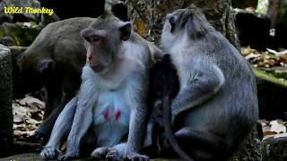 What He Doing On Female Monkey Two Time ? MV 0121
