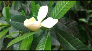 Tagar flower time lapse