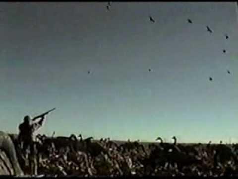 Lov divoké husy
