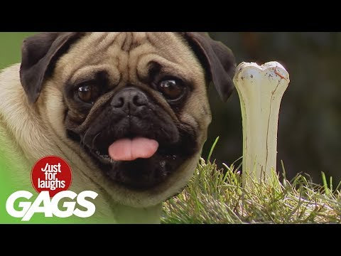 Dogs Get Pranked ! - Best of Just for Laughs Gags