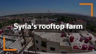 Syrian builds rooftop farm to beat economic hardship