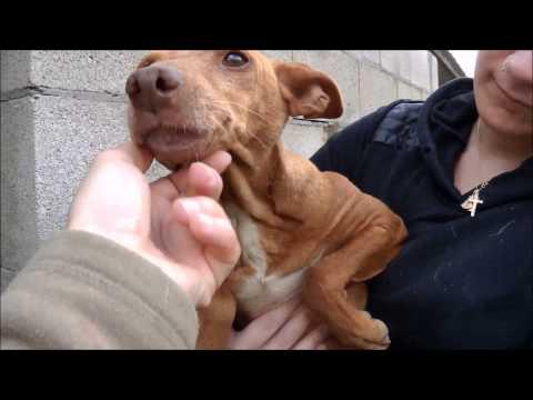 Animalinneed: New Video of Pitina