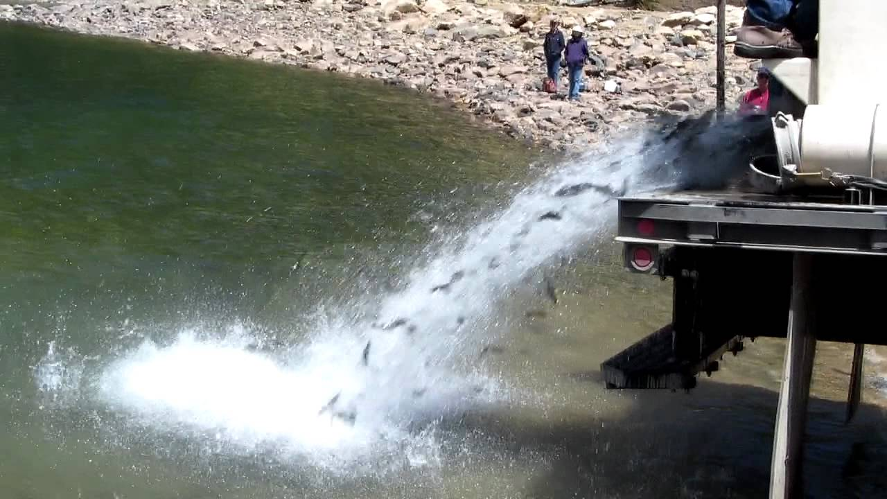 Fish hatchery at jefferson lake youtube for Colorado fishing laws