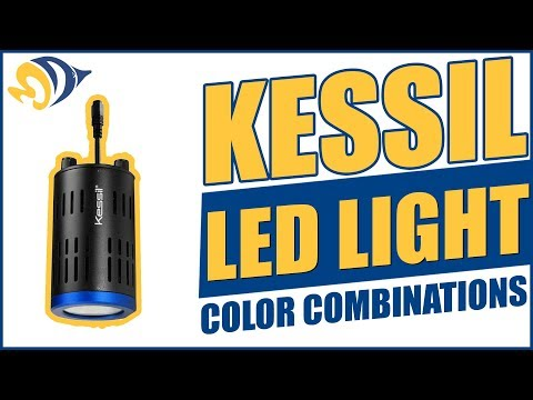 Kessil LED Light Color Combinations: A150W Special Blend