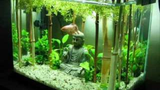 Fishtank Evolution: Planted Tank Aquascapes